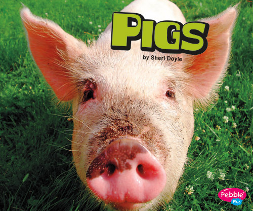 ED16-Pigs_small
